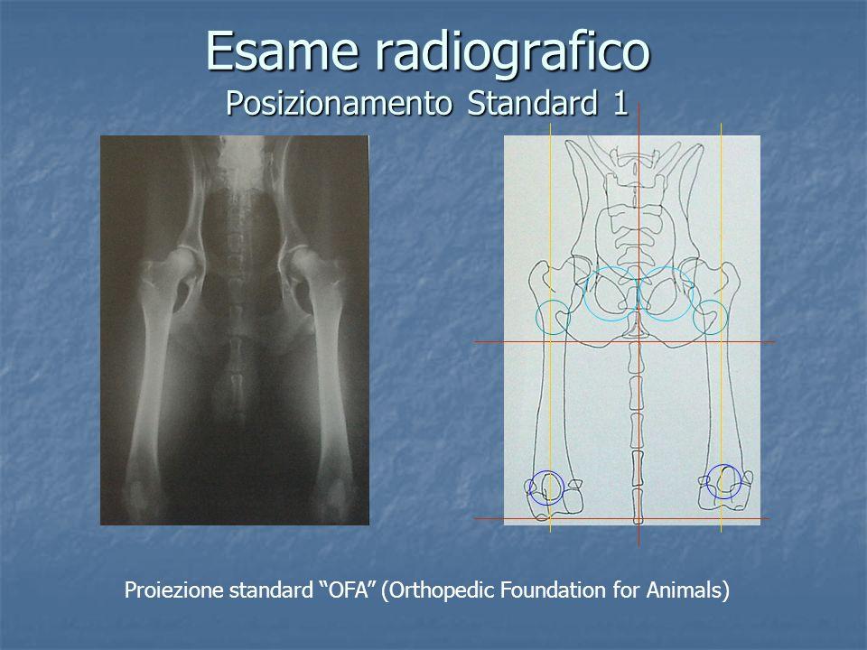 Esame radiografico Posizionamento Standard 1 Proiezione standard OFA (Orthopedic Foundation for Animals)