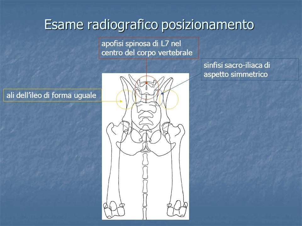 apofisi spinosa di L7 nel centro del corpo vertebrale ali dellileo di forma uguale sinfisi sacro-iliaca di aspetto simmetrico Esame radiografico posiz