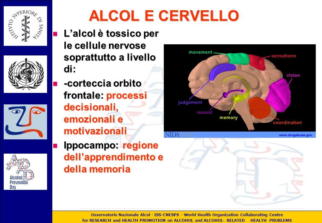 Osservatorio Nazionale Alcol - ISS-CNESPS - World Health Organization Collaborating Centre for RESEARCH and HEALTH PROMOTION on ALCOHOL and ALCOHOL- RELATED HEALTH PROBLEMS ALCOL E CERVELLO Lalcol è tossico per le cellule nervose soprattutto a livello di: Lalcol è tossico per le cellule nervose soprattutto a livello di: -corteccia orbito frontale: processi decisionali, emozionali e motivazionali -corteccia orbito frontale: processi decisionali, emozionali e motivazionali Ippocampo: regione dellapprendimento e della memoria Ippocampo: regione dellapprendimento e della memoria