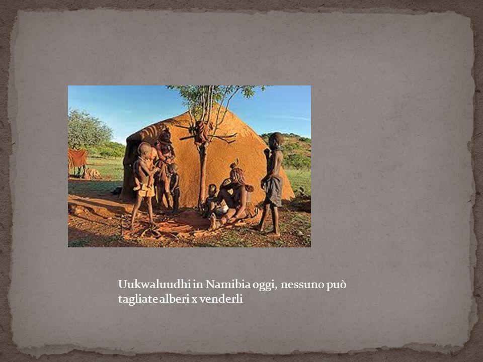 Uukwaluudhi in Namibia oggi, nessuno può tagliate alberi x venderli