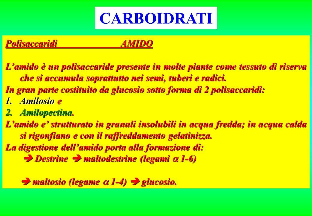 CARBOIDRATI PolisaccaridiAMIDO Lamido è un polisaccaride presente in molte piante come tessuto di riserva che si accumula soprattutto nei semi, tuberi
