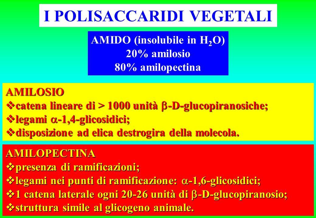 I POLISACCARIDI VEGETALI AMIDO (insolubile in H 2 O) 20% amilosio 80% amilopectina AMILOSIO catena lineare di > 1000 unità -D-glucopiranosiche; catena