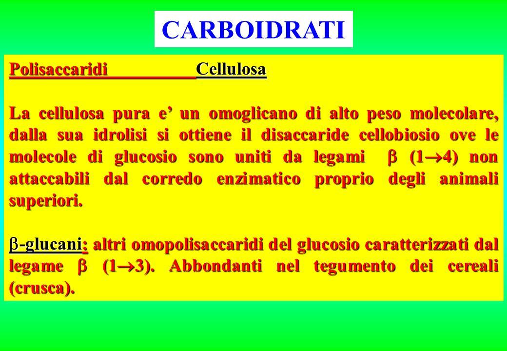 CARBOIDRATI Polisaccaridi Cellulosa La cellulosa pura e un omoglicano di alto peso molecolare, dalla sua idrolisi si ottiene il disaccaride cellobiosi