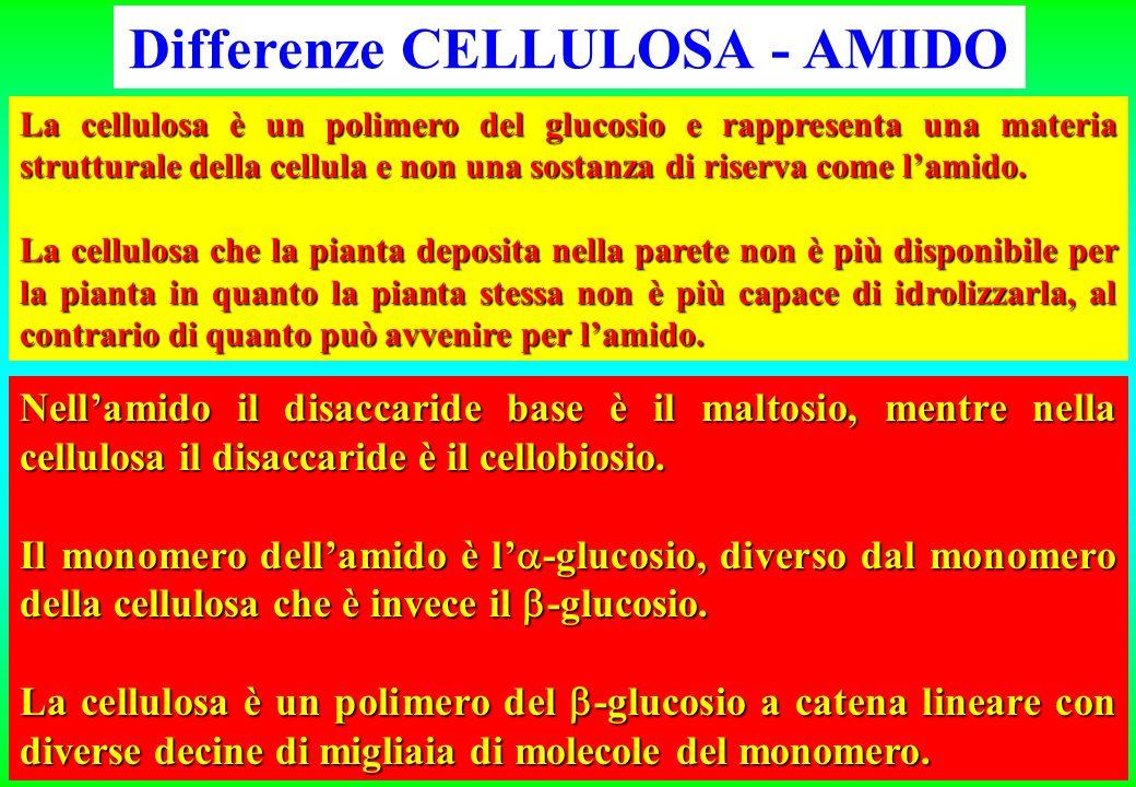La cellulosa è un polimero del glucosio e rappresenta una materia strutturale della cellula e non una sostanza di riserva come lamido. La cellulosa ch