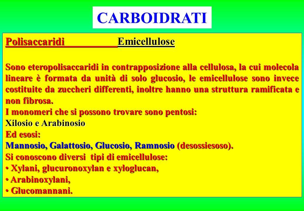 CARBOIDRATI Polisaccaridi Emicellulose Sono eteropolisaccaridi in contrapposizione alla cellulosa, la cui molecola lineare è formata da unità di solo
