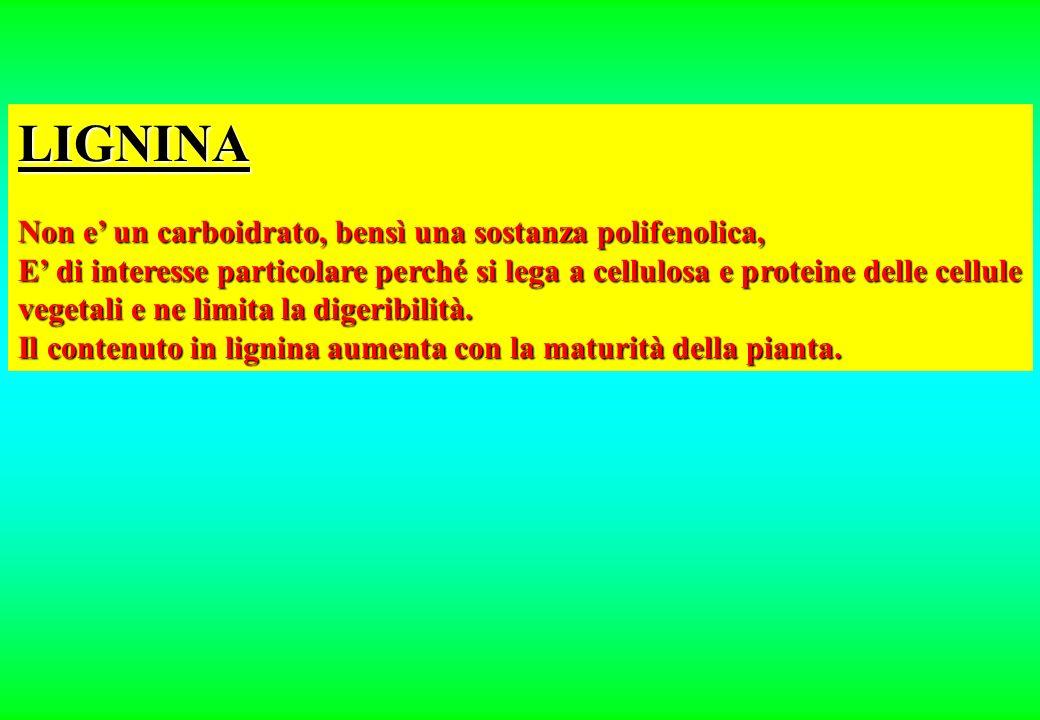 LIGNINA Non e un carboidrato, bensì una sostanza polifenolica, E di interesse particolare perché si lega a cellulosa e proteine delle cellule vegetali