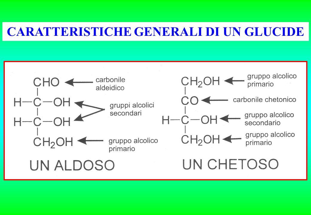 Disaccaridi I più importanti sono saccarosio, maltosio, lattosio e cellobioso: dalla loro idrolisi si ottengono due esosi.