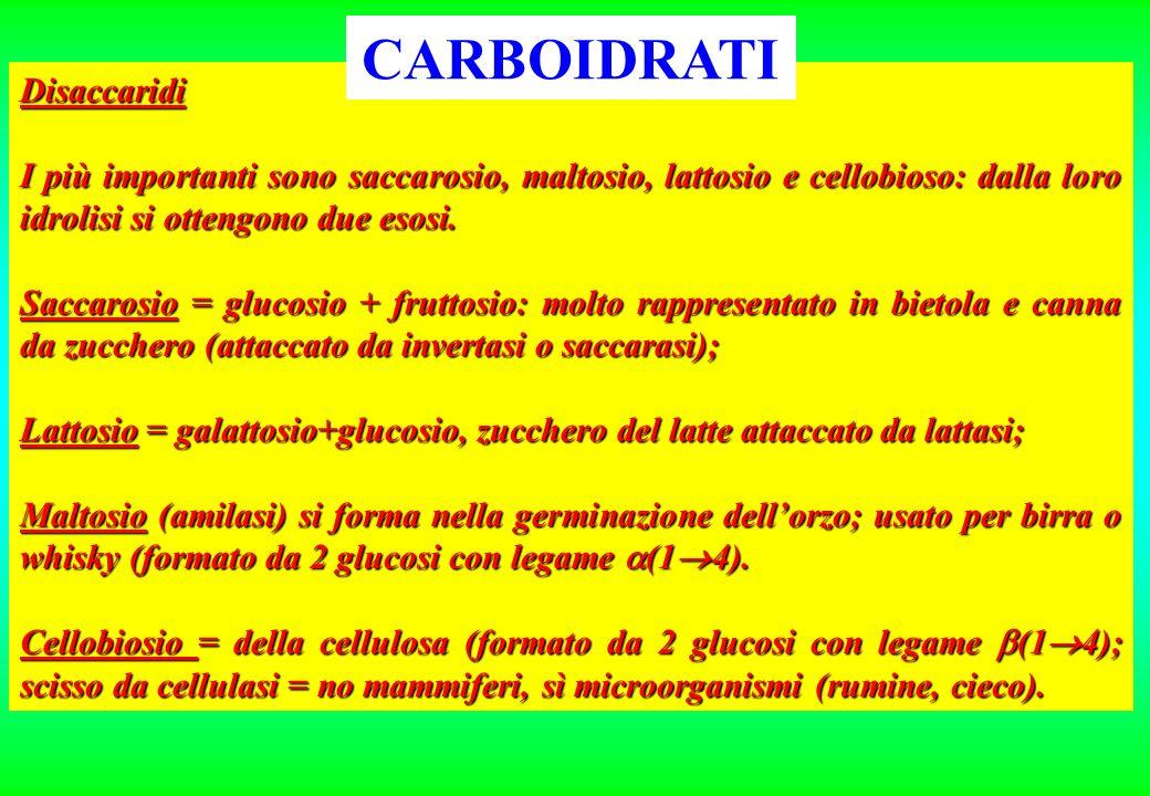 Disaccaridi I più importanti sono saccarosio, maltosio, lattosio e cellobioso: dalla loro idrolisi si ottengono due esosi. Saccarosio = glucosio + fru