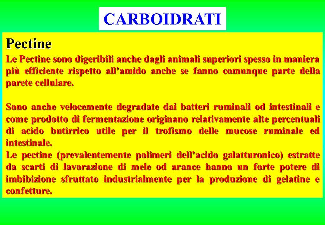CARBOIDRATI I legami ALFA fra molecole di glucosio sono idrolizzabili da parte degli enzimi degli animali superiori I BETA invece no.