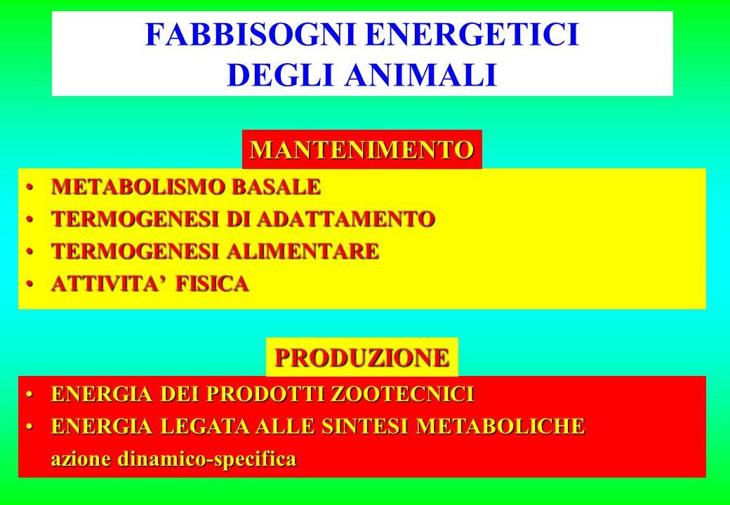 FABBISOGNI ENERGETICI DEGLI ANIMALI METABOLISMO BASALEMETABOLISMO BASALE TERMOGENESI DI ADATTAMENTOTERMOGENESI DI ADATTAMENTO TERMOGENESI ALIMENTARETERMOGENESI ALIMENTARE ATTIVITA FISICAATTIVITA FISICA ENERGIA DEI PRODOTTI ZOOTECNICIENERGIA DEI PRODOTTI ZOOTECNICI ENERGIA LEGATA ALLE SINTESI METABOLICHEENERGIA LEGATA ALLE SINTESI METABOLICHE azione dinamico-specifica MANTENIMENTO PRODUZIONE