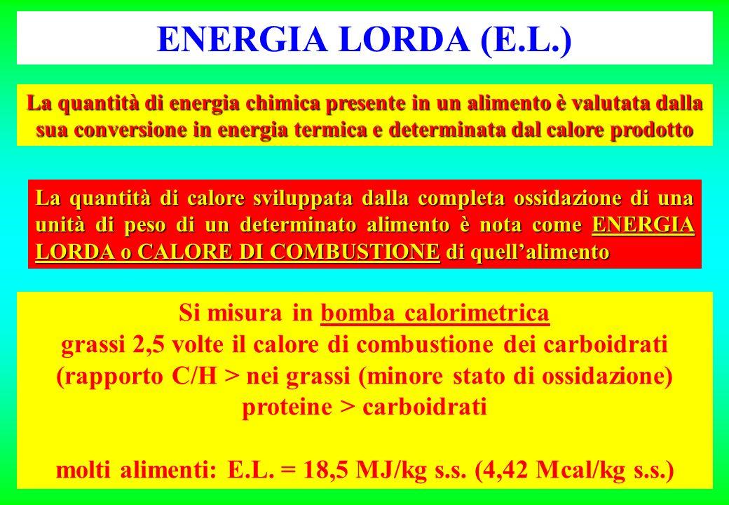 ENERGIA LORDA (E.L.) La quantità di energia chimica presente in un alimento è valutata dalla sua conversione in energia termica e determinata dal calore prodotto La quantità di calore sviluppata dalla completa ossidazione di una unità di peso di un determinato alimento è nota come ENERGIA LORDA o CALORE DI COMBUSTIONE di quellalimento Si misura in bomba calorimetrica grassi 2,5 volte il calore di combustione dei carboidrati (rapporto C/H > nei grassi (minore stato di ossidazione) proteine > carboidrati molti alimenti: E.L.