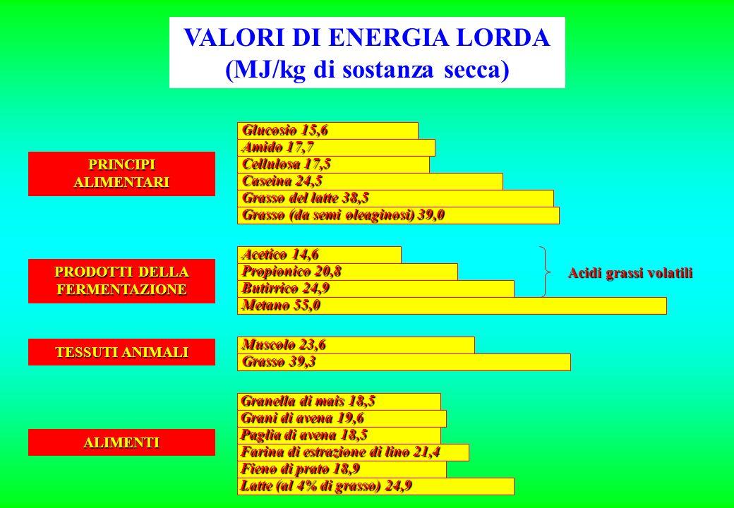 Glucosio 15,6 Amido 17,7 Cellulosa 17,5 Caseina 24,5 Grasso del latte 38,5 Grasso (da semi oleaginosi) 39,0 Acetico 14,6 Propionico 20,8 Butirrico 24,9 Metano 55,0 Muscolo 23,6 Grasso 39,3 Granella di mais 18,5 Grani di avena 19,6 Paglia di avena 18,5 Farina di estrazione di lino 21,4 Fieno di prato 18,9 Latte (al 4% di grasso) 24,9 Acidi grassi volatili PRINCIPIALIMENTARI PRODOTTI DELLA FERMENTAZIONE TESSUTI ANIMALI ALIMENTI VALORI DI ENERGIA LORDA (MJ/kg di sostanza secca)