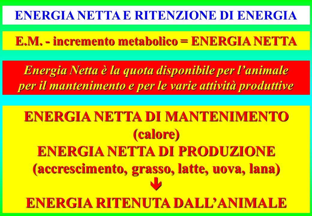 ENERGIA NETTA E RITENZIONE DI ENERGIA E.M.