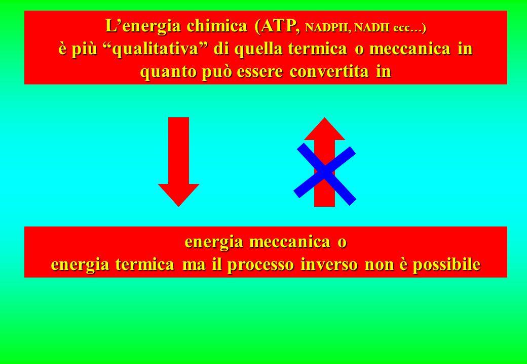 energia meccanica o energia termica ma il processo inverso non è possibile Lenergia chimica (ATP, NADPH, NADH ecc…) è più qualitativa di quella termica o meccanica in quanto può essere convertita in