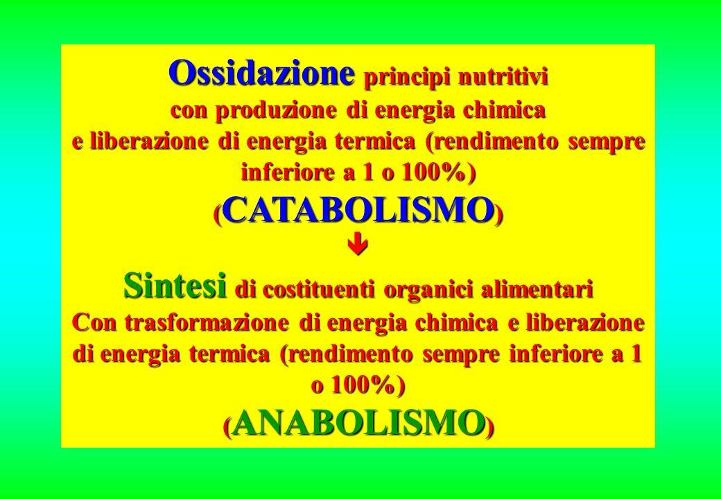 Ossidazione principi nutritivi con produzione di energia chimica e liberazione di energia termica (rendimento sempre inferiore a 1 o 100%) ( CATABOLISMO ) Sintesi di costituenti organici alimentari Con trasformazione di energia chimica e liberazione di energia termica (rendimento sempre inferiore a 1 o 100%) ( ANABOLISMO )