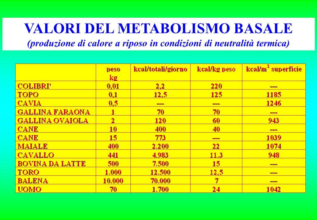 VALORI DEL METABOLISMO BASALE (produzione di calore a riposo in condizioni di neutralità termica)
