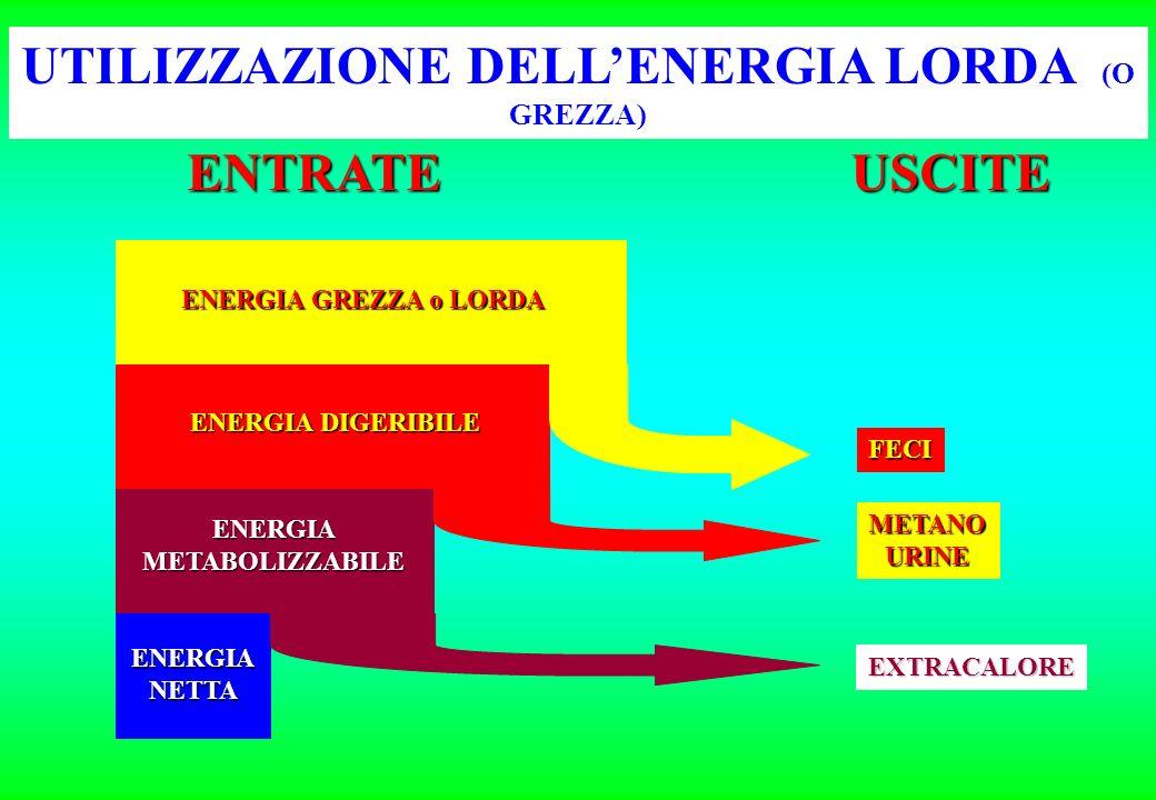 ENERGIA GREZZA o LORDA ENERGIA DIGERIBILE ENERGIAMETABOLIZZABILE ENERGIANETTA FECI METANOURINE EXTRACALORE USCITE UTILIZZAZIONE DELLENERGIA LORDA (O GREZZA) ENTRATE