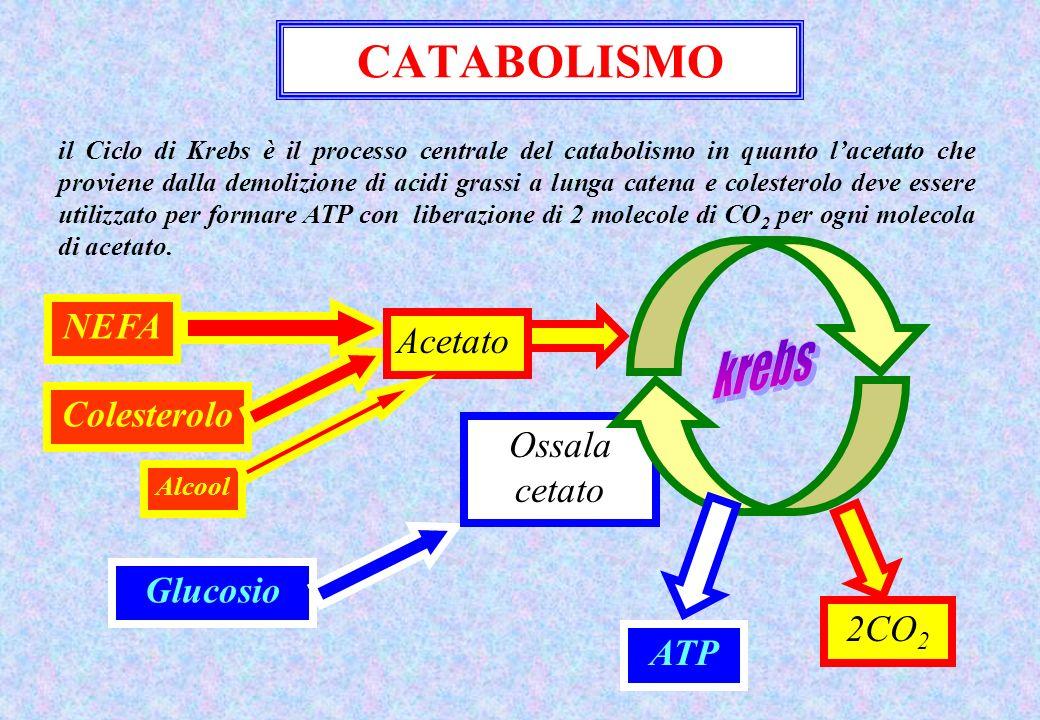 CATABOLISMO il Ciclo di Krebs è il processo centrale del catabolismo in quanto lacetato che proviene dalla demolizione di acidi grassi a lunga catena e colesterolo deve essere utilizzato per formare ATP con liberazione di 2 molecole di CO 2 per ogni molecola di acetato.