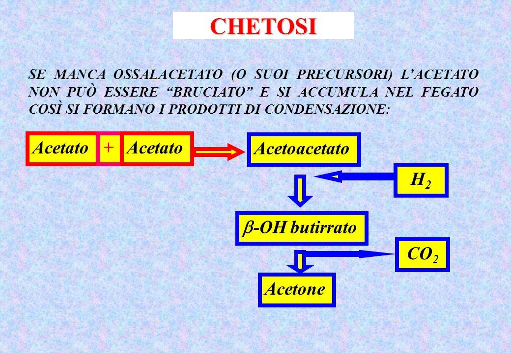 CHETOSI SE MANCA OSSALACETATO (O SUOI PRECURSORI) LACETATO NON PUÒ ESSERE BRUCIATO E SI ACCUMULA NEL FEGATO COSÌ SI FORMANO I PRODOTTI DI CONDENSAZIONE: Acetato+ Acetoacetato -OH butirrato CO 2 Acetone H2H2