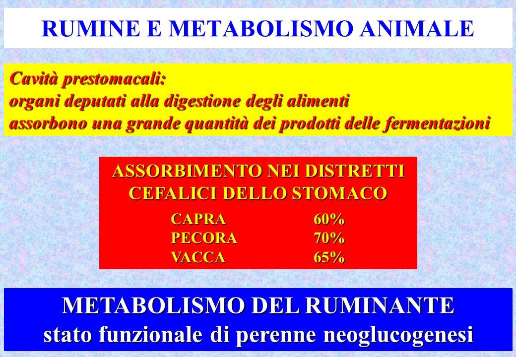 RUMINE E METABOLISMO ANIMALE Cavità prestomacali: organi deputati alla digestione degli alimenti assorbono una grande quantità dei prodotti delle fermentazioni ASSORBIMENTO NEI DISTRETTI CEFALICI DELLO STOMACO CAPRA60% PECORA70% VACCA65% METABOLISMO DEL RUMINANTE stato funzionale di perenne neoglucogenesi