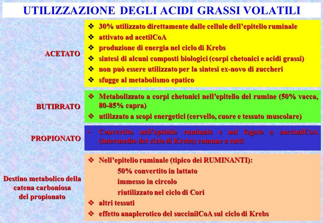 UTILIZZAZIONE DEGLI ACIDI GRASSI VOLATILI 30% utilizzato direttamente dalle cellule dellepitelio ruminale 30% utilizzato direttamente dalle cellule de