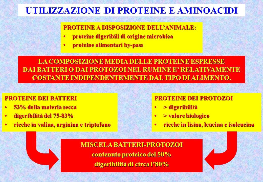 UTILIZZAZIONE DI PROTEINE E AMINOACIDI PROTEINE A DISPOSIZIONE DELLANIMALE: proteine digeribili di origine microbicaproteine digeribili di origine microbica proteine alimentari by-passproteine alimentari by-pass PROTEINE DEI BATTERI 53% della materia secca53% della materia secca digeribilità del 75-83%digeribilità del 75-83% ricche in valina, arginina e triptofanoricche in valina, arginina e triptofano PROTEINE DEI PROTOZOI > digeribilità> digeribilità > valore biologico> valore biologico ricche in lisina, leucina e isoleucinaricche in lisina, leucina e isoleucina MISCELA BATTERI-PROTOZOI contenuto proteico del 50% digeribilità di circa l80% LA COMPOSIZIONE MEDIA DELLE PROTEINE ESPRESSE DAI BATTERI O DAI PROTOZOI NEL RUMINE E RELATIVAMENTE COSTANTE INDIPENDENTEMENTE DAL TIPO DI ALIMENTO.