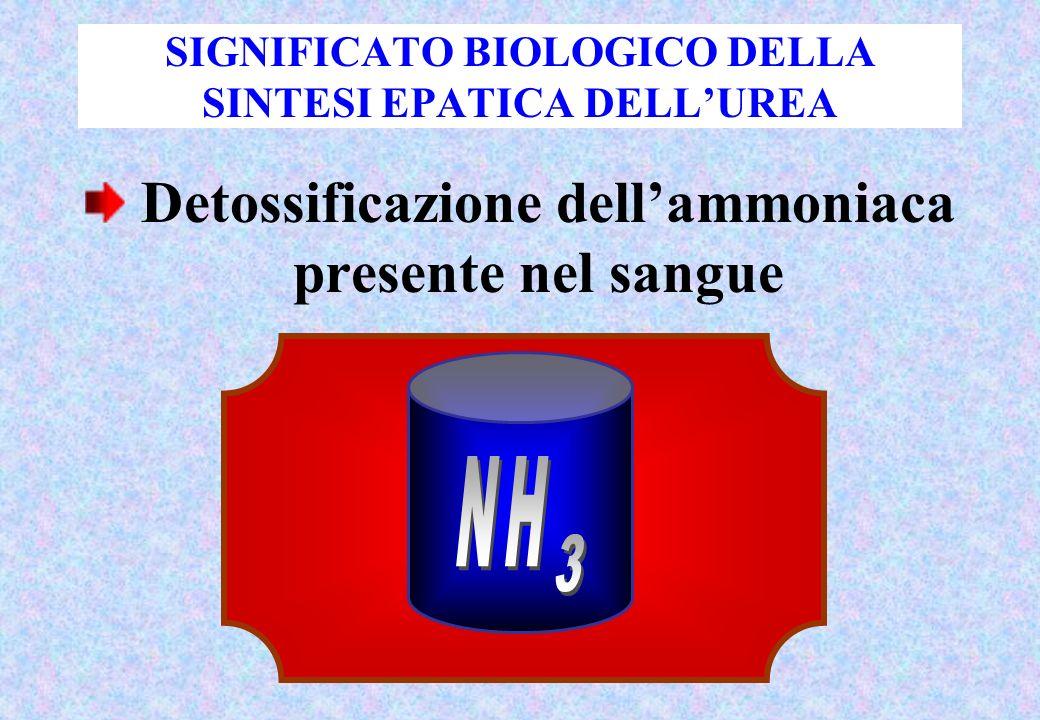 SIGNIFICATO BIOLOGICO DELLA SINTESI EPATICA DELLUREA Detossificazione dellammoniaca presente nel sangue