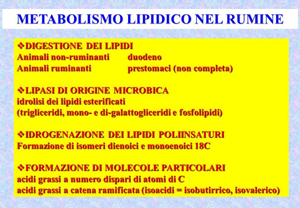 DIGESTIONE DEI LIPIDI DIGESTIONE DEI LIPIDI Animali non-ruminantiduodeno Animali ruminantiprestomaci (non completa) LIPASI DI ORIGINE MICROBICA LIPASI DI ORIGINE MICROBICA idrolisi dei lipidi esterificati (trigliceridi, mono- e di-galattogliceridi e fosfolipidi) IDROGENAZIONE DEI LIPIDI POLIINSATURI IDROGENAZIONE DEI LIPIDI POLIINSATURI Formazione di isomeri dienoici e monoenoici 18C FORMAZIONE DI MOLECOLE PARTICOLARI FORMAZIONE DI MOLECOLE PARTICOLARI acidi grassi a numero dispari di atomi di C acidi grassi a catena ramificata (isoacidi = isobutirrico, isovalerico) METABOLISMO LIPIDICO NEL RUMINE
