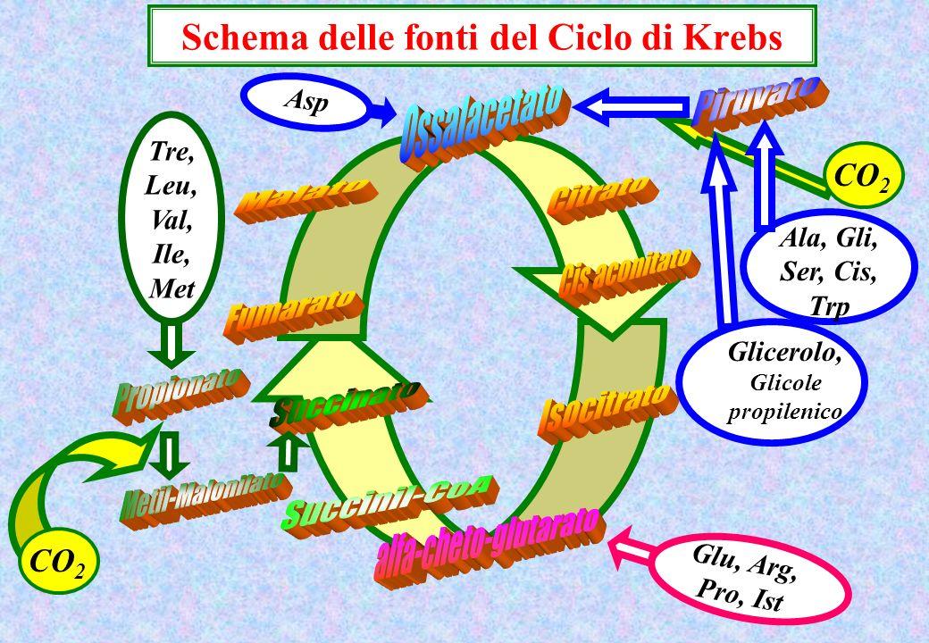 Schema delle fonti del Ciclo di Krebs Tre, Leu, Val, Ile, Met Ala, Gli, Ser, Cis, Trp Glicerolo, Glicole propilenico Glu, Arg, Pro, Ist Asp CO 2