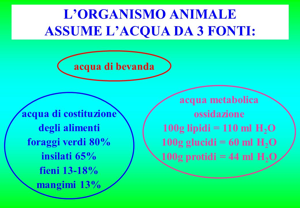 LORGANISMO ANIMALE ASSUME LACQUA DA 3 FONTI: acqua di bevanda acqua di costituzione degli alimenti foraggi verdi 80% insilati 65% fieni 13-18% mangimi