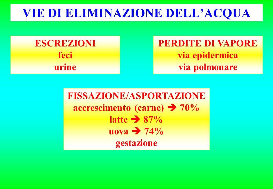 VIE DI ELIMINAZIONE DELLACQUA PERDITE DI VAPORE via epidermica via polmonare FISSAZIONE/ASPORTAZIONE accrescimento (carne) 70% latte 87% uova 74% gest