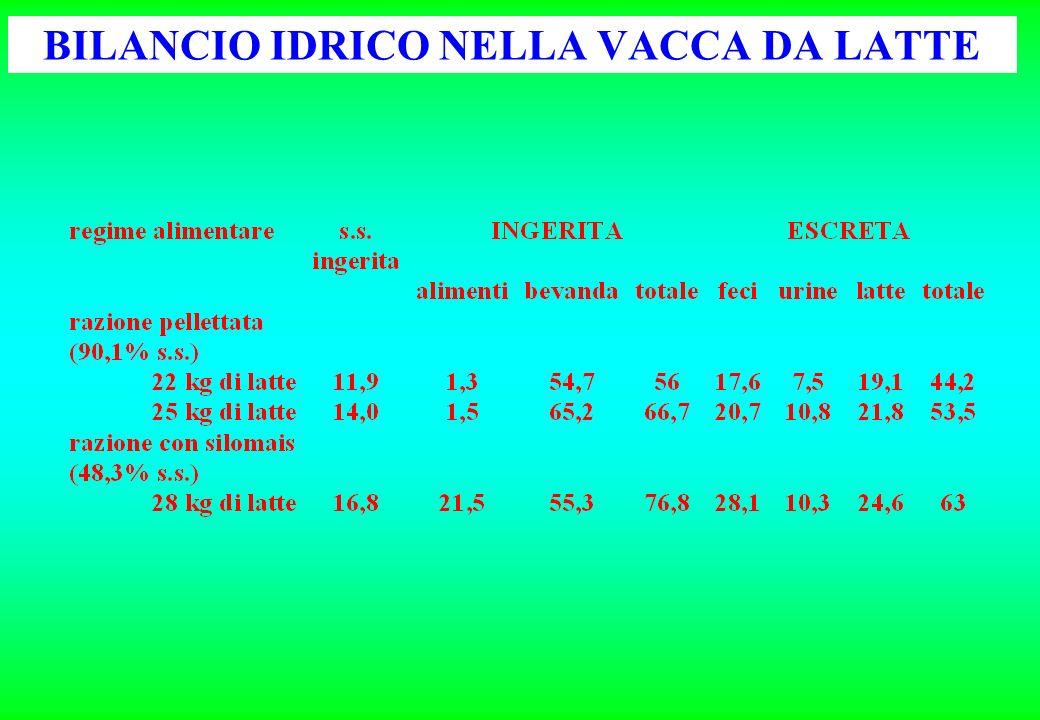 ESEMPIO DI CALCOLO DI FABBISOGNI IDRICI bovina da latte: 35 kg latte/d; 24 kg/d s.s.; T = 15°C 24 kg xxxx 4,5 5,5 108 kg 132 kg ==== Si può stimare che lACQUA INGERITA vari da un minimo di 108 kg ad un massimo di 132 kg Quantità di alimento silomais24 kg fieno 5 kg mangime13,5 kg TOTALE xxxxxx Umidità 65% 13% Acqua contenuta nellalimento 15,60 kg 0,65 kg 1,76 kg 18,01 kg Per acqua ingerita si intende lacqua totale che lanimale assume, quindi comprende anche quella fornita dagli alimenti; trascurando il valore dellacqua metabolica, lapporto idrico della razione può essere calcolato moltiplicando le quantità dei singoli alimenti per il rispettivo tenore in umidità.
