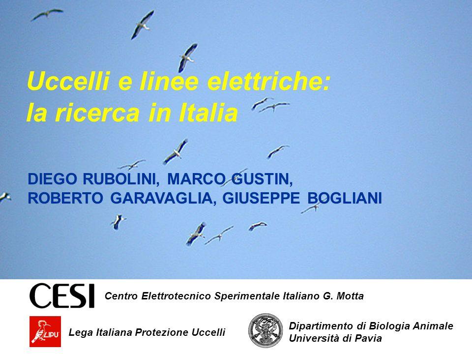 Lega Italiana Protezione Uccelli DIEGO RUBOLINI, MARCO GUSTIN, ROBERTO GARAVAGLIA, GIUSEPPE BOGLIANI Uccelli e linee elettriche: la ricerca in Italia