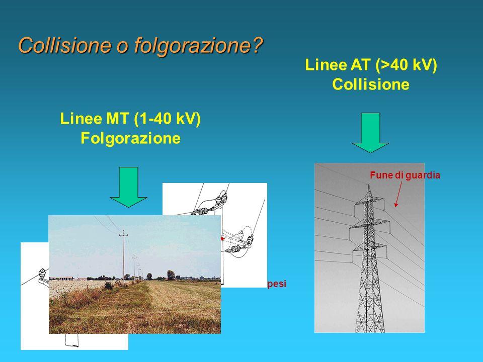 Linee AT (>40 kV) Collisione Linee MT (1-40 kV) Folgorazione Collisione o folgorazione? Fune di guardia Isolatori a perno Mensola Isolatori sospesi Am