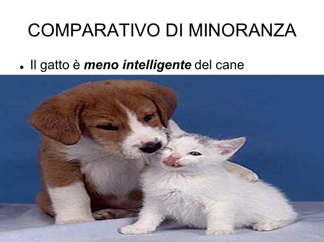 COMPARATIVO DI MINORANZA Il gatto è meno intelligente del cane