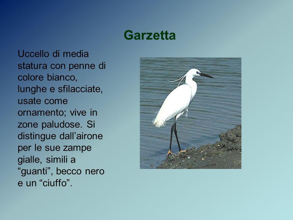 Garzetta Uccello di media statura con penne di colore bianco, lunghe e sfilacciate, usate come ornamento; vive in zone paludose. Si distingue dallairo