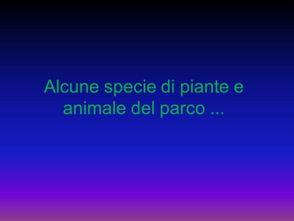 Alcune specie di piante e animale del parco...