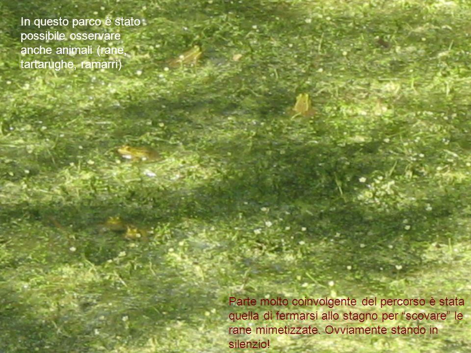 In questo parco è stato possibile osservare anche animali (rane, tartarughe, ramarri) Parte molto coinvolgente del percorso è stata quella di fermarsi allo stagno per scovare le rane mimetizzate.