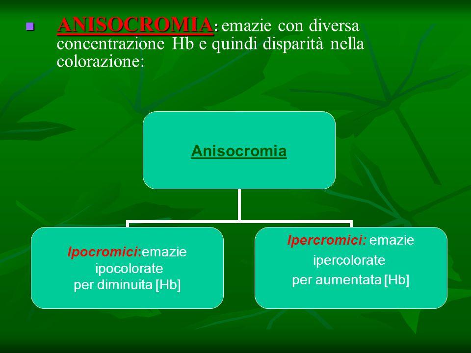 ANISOCROMIA : ANISOCROMIA : emazie con diversa concentrazione Hb e quindi disparità nella colorazione: Anisocromia Ipocromici:emazie ipocolorate per d