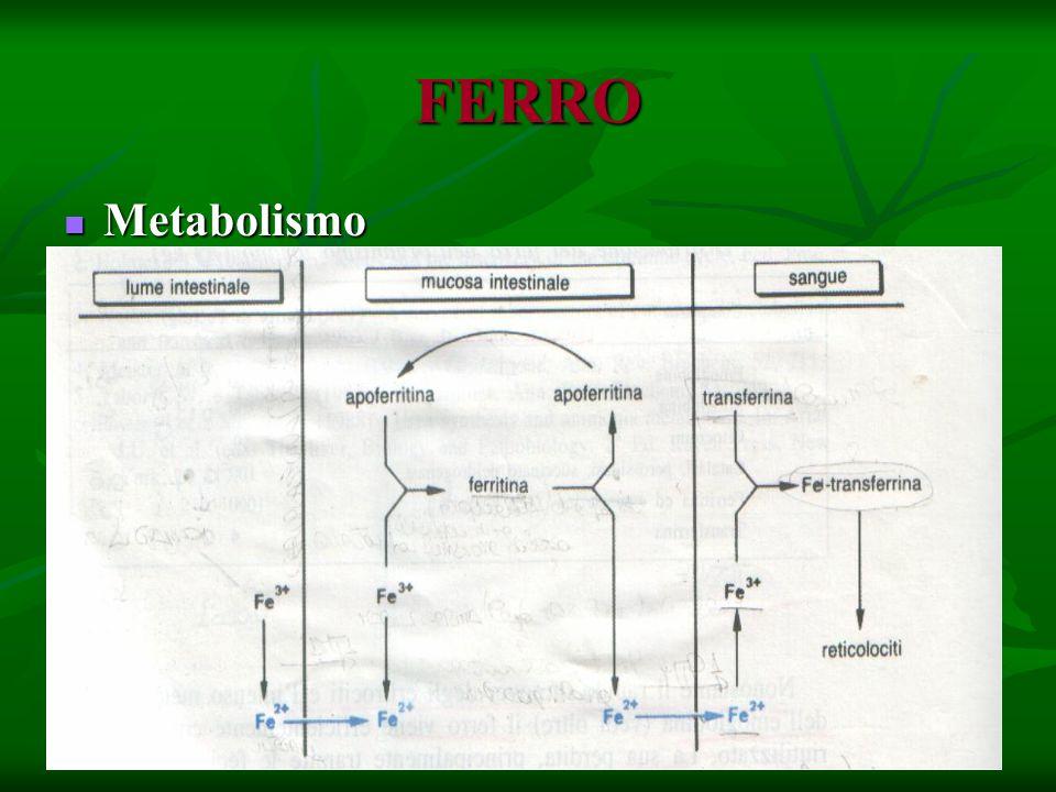 FERRO Metabolismo Metabolismo