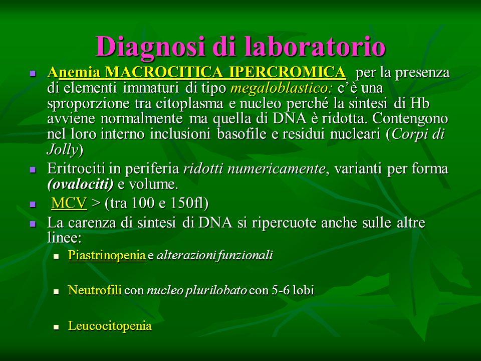 Diagnosi di laboratorio Anemia MACROCITICA IPERCROMICA per la presenza di elementi immaturi di tipo megaloblastico: cè una sproporzione tra citoplasma