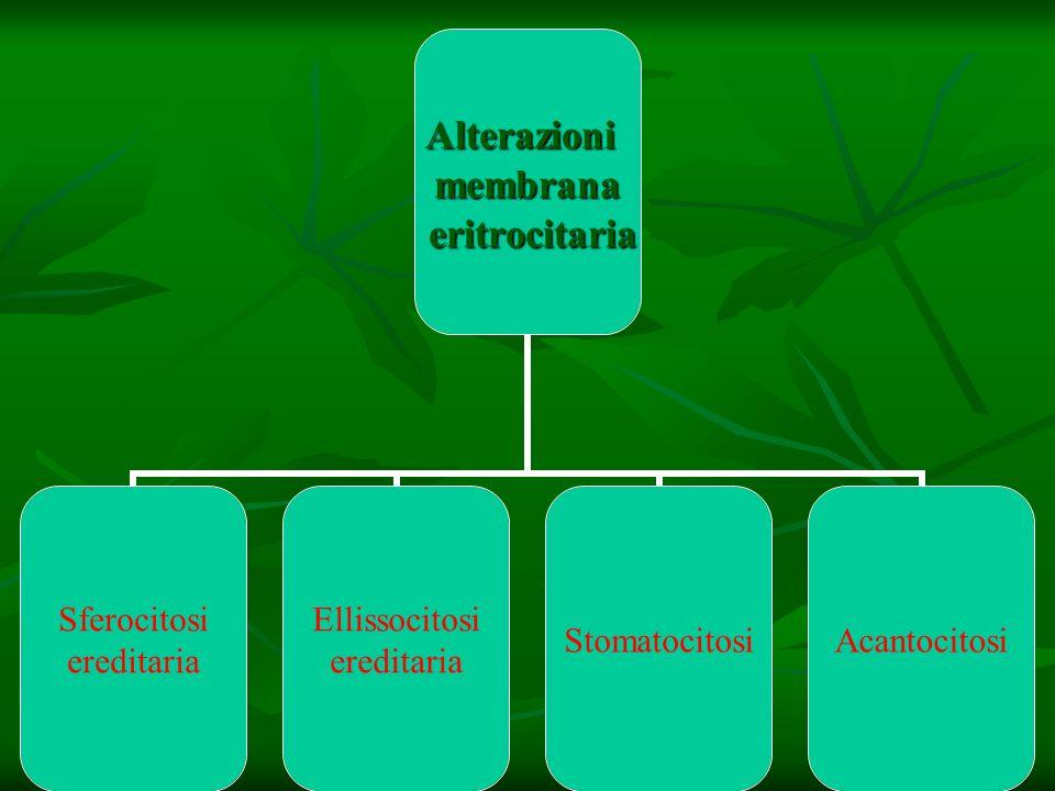 Alterazionimembrana eritrocitaria eritrocitaria Sferocitosi ereditaria Ellissocitosi ereditaria StomatocitosiAcantocitosi