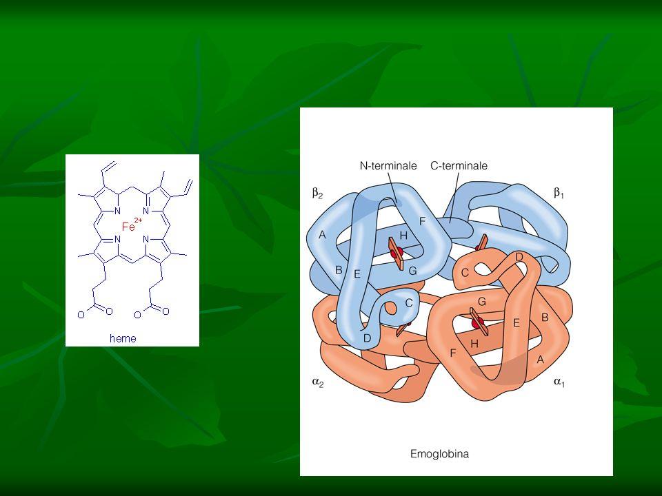 ANISOCROMIA : ANISOCROMIA : emazie con diversa concentrazione Hb e quindi disparità nella colorazione: Anisocromia Ipocromici:emazie ipocolorate per diminuita [Hb] Ipercromici: emazie ipercolorate per aumentata [Hb]
