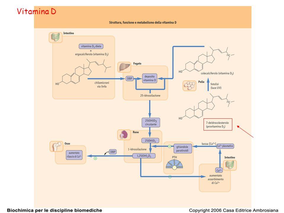 Poiché luomo è in grado di produrre la vitamina D 3 a partire dal 7-deidrocolesterolo attraverso lazione della luce del sole sulla pelle la vitamina D non è affatto una vitamina.