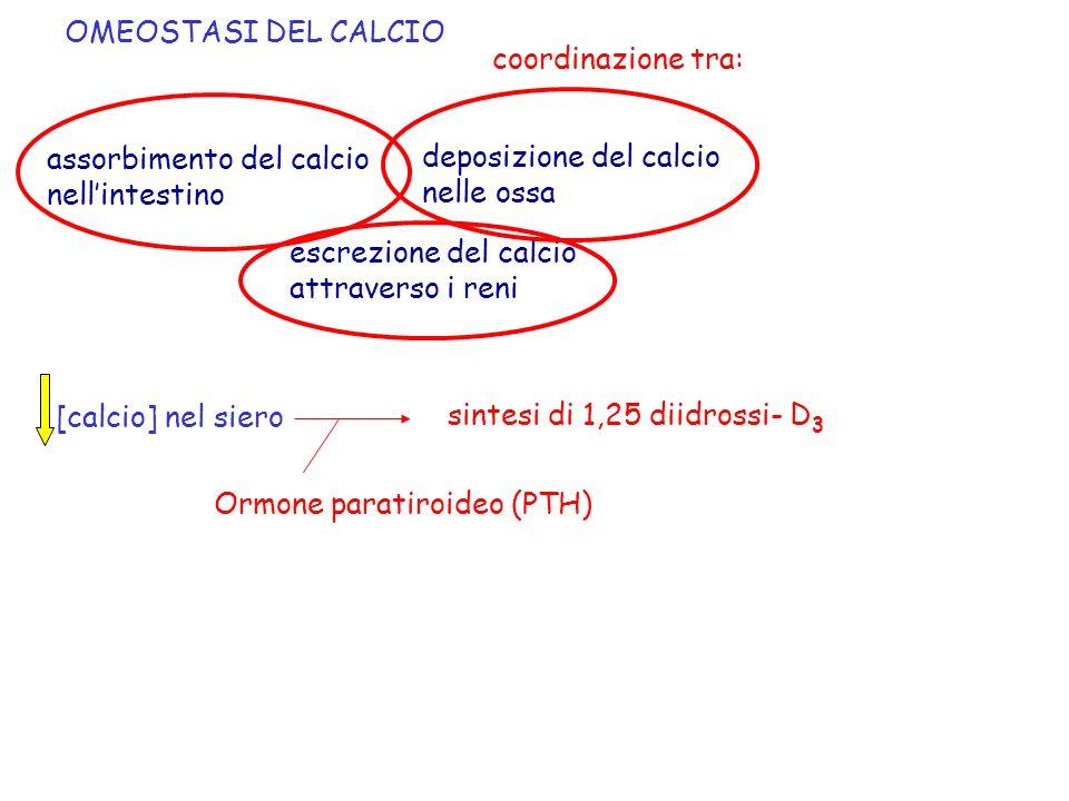 OMEOSTASI DEL CALCIO coordinazione tra: assorbimento del calcio nellintestino deposizione del calcio nelle ossa escrezione del calcio attraverso i ren