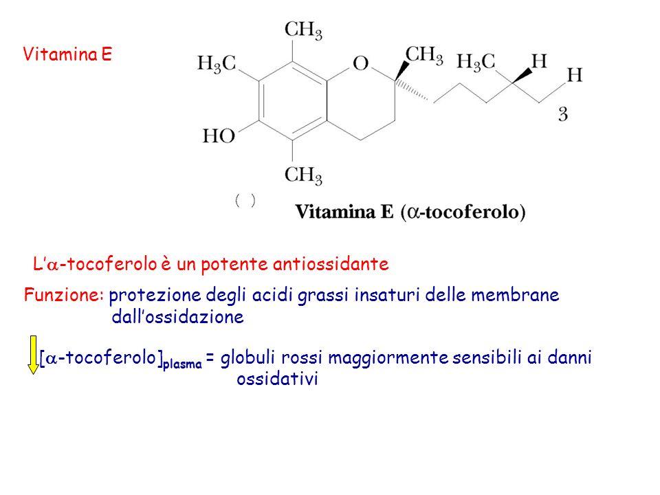 Vitamina E L -tocoferolo è un potente antiossidante Funzione: protezione degli acidi grassi insaturi delle membrane dallossidazione [ -tocoferolo] pla