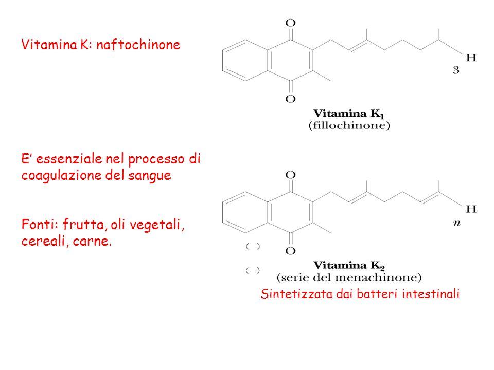 Vitamina K: naftochinone E essenziale nel processo di coagulazione del sangue Fonti: frutta, oli vegetali, cereali, carne. Sintetizzata dai batteri in
