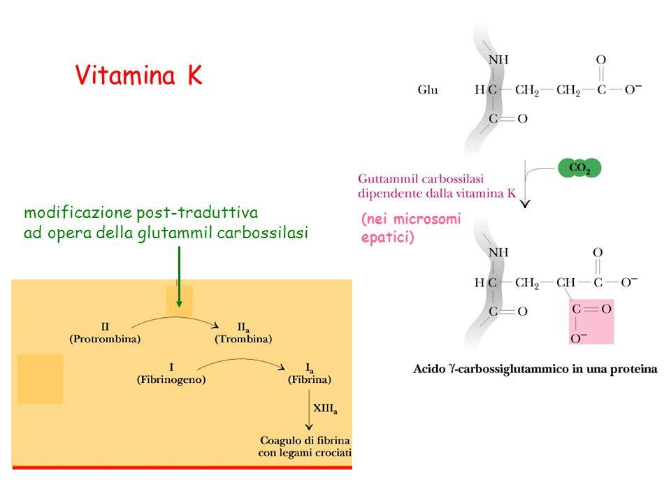 Vitamina K modificazione post-traduttiva ad opera della glutammil carbossilasi (nei microsomi epatici)