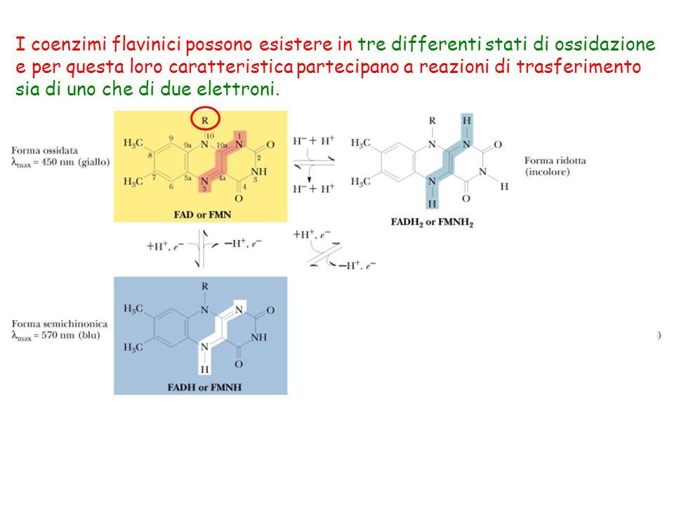 I coenzimi flavinici possono esistere in tre differenti stati di ossidazione e per questa loro caratteristica partecipano a reazioni di trasferimento