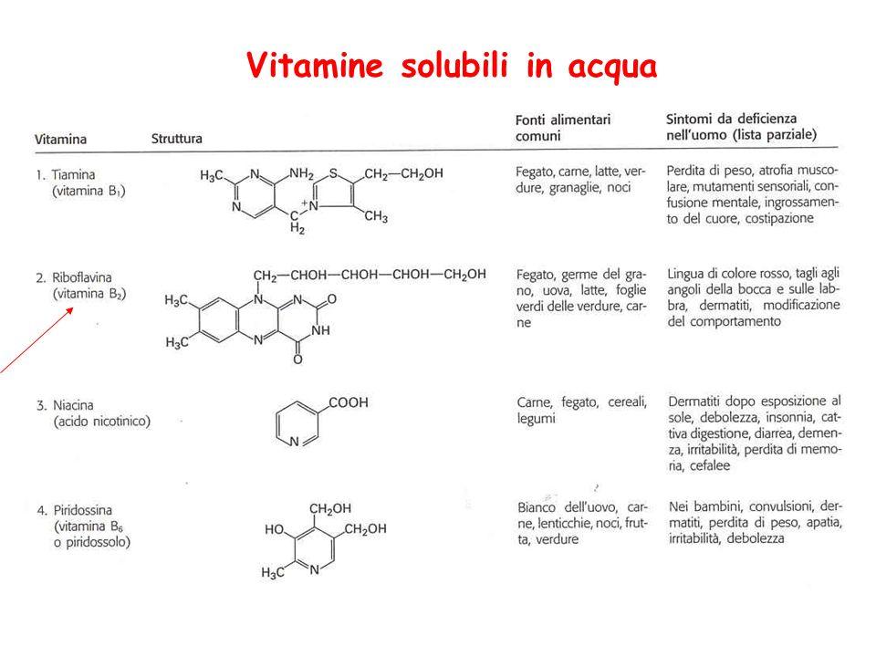 Vitamina PP La niacina o acido nicotinico è parte essenziale di due importanti coenzimi NAD + e NADP + ( niacina= nicotinico, acido e vitamina) avitaminosi= pellagra (debellata) Le deidrogenasi trasferiscono uno ione idruro che contiene due elettroni: sono trasportatori di coppie di elettroni NAD + e NADP +